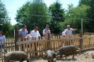 Uzgajivač crne slavonske svinje