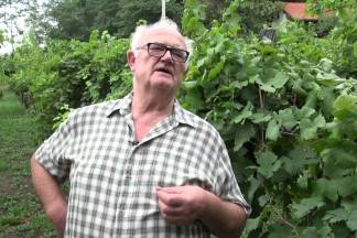 O vinima i vinskim pričama Požeške gore s Vinskim kardinalom Vladom Bauerom