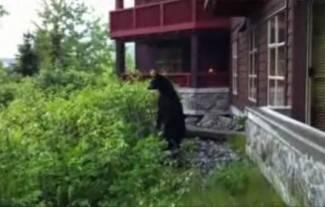Hercegovac u samoobrani zadavio velikog medvjeda