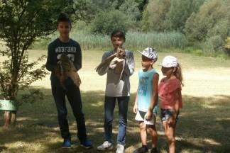 Povratak mladih sova ušara u prirodu