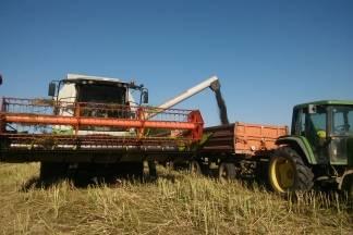Žetva pšenice, stočnog graška i uljane repice na ¨Ratarnici¨