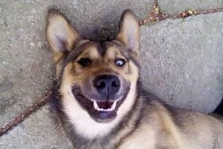 Iz dvorišta u Šumanovcu nestao pas