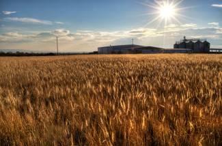 Paklena vrućina: Najtoplije u Velikoj, sutra će biti još gore