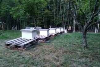 Pčelarstvo- dodatni posao i slatka zarada