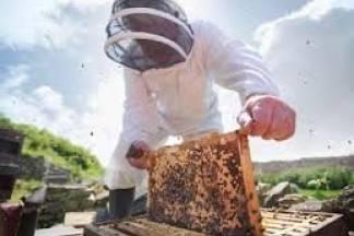 Pčelarima isplaćeno 14 milijuna kuna