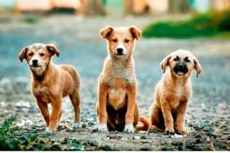 Zakonske obaveze skrbnika pasa