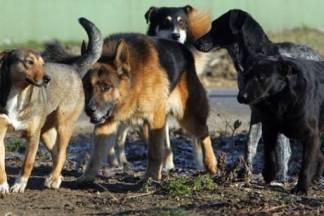 21-godišnjakinja bez nadzora držala čak sedam pasa