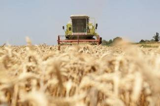 U Poljoprivredi Lipik zadovoljni izvrsnim prinosom pšenice