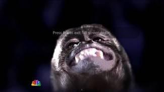 NBC zlatnu olimpijku usporedio s majmunom