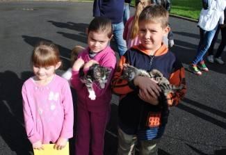 Mace iz skloništa: Sivka i Šapica imaju novi dom