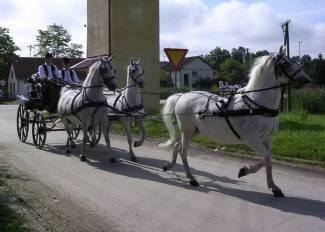 Veterinari potrebniji političarima nego konjima