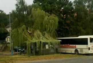 Snimio čitatelj: Oluja jutros rušila stabla u Pleternici