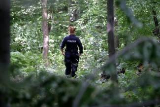 Uhvaćen drenovački drvokradica: Ukrao 18 stabala
