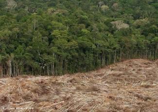 Ekološki aktivisti ginu u brazilskim šumama