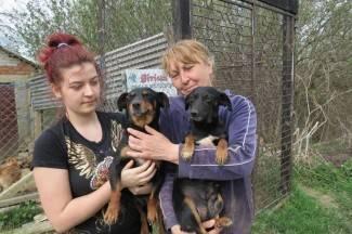 Pokrenuli akciju za manje pasa lutalica i zgaženih životinja na cesti