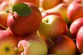 Poljoprivredna komora u Kaptolu ispituje zrelost jabuka