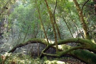 Nepoznati počinitelj ukrao nekoliko stabala ¨Hrvatskim šumama¨