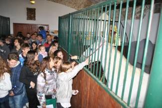 Obilježili obljetnicu povratka lipicanaca (foto)