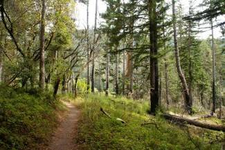 Ukrali stabla hrasta, bagrema i graba