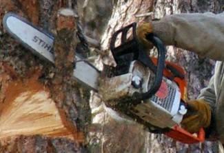Posjekao i otuđio nekoliko stabala graba