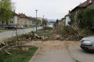 Uljepšavanje Vukovarske: Porušili drveće i ostavili ga na nogostupu