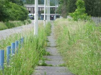 Nije vidjela kosilice: Staza prema staklani zarasla u travu