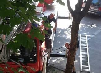 Vaše fotografije: Spašavanje mačke s drveta u Tuđmanovoj