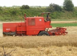 Očekivana cijena pšenice od 90 lipa do jedne kune za kilogram