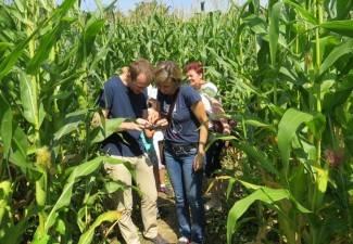 U kukuruznom labirintu djeca se snalaze bolje od odraslih (video)