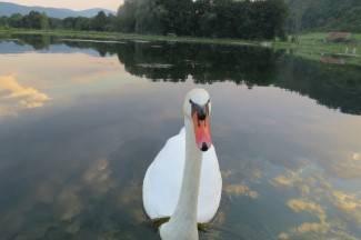 Pravi pozer: Tko je najljepši u ovom jezeru?