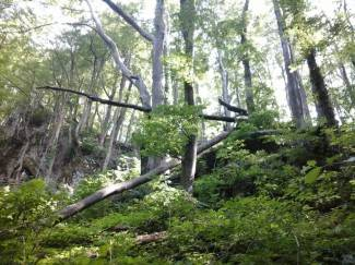 Ruševo: Ukradeno nekoliko stabala bukve i hrasta