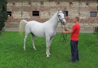 Lipičkim konjima dva velika priznanja u Gudovcu