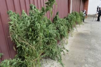 Kvalitetniji urod: Pleterničanin uzgajao travu ¨pelcanjem¨