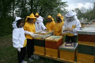 Uspješno realiziran projekt ¨The Bee Incubator¨