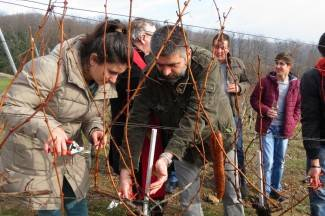 Studenti sami obrađuju vinograd; radovi krenuli orezivanjem i blagoslovom trsova