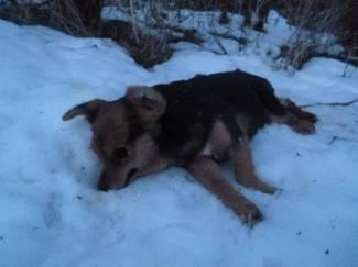Mještani u strahu: Tko truje pse i mačke u Gornjim Vrhovcima?