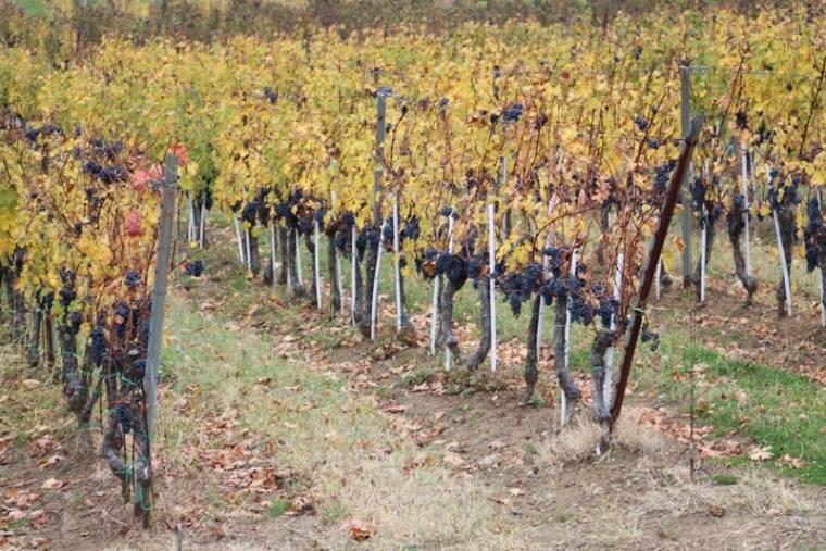 U vinskoj klijeti požeškog Veleučilišta održana radionica ʺDigitalna poljoprivreda u vinogradarstvuʺ