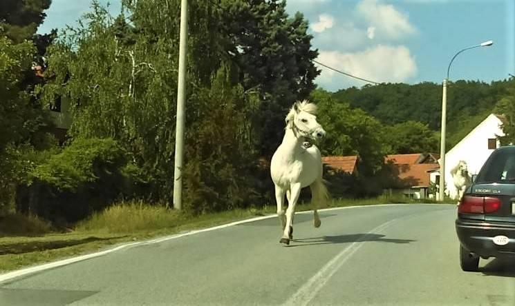Vozilom udario o konja