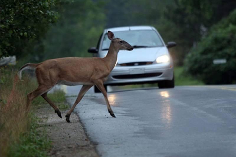 Policija upozorava vozače na učestalu pojavu divljači na cesti