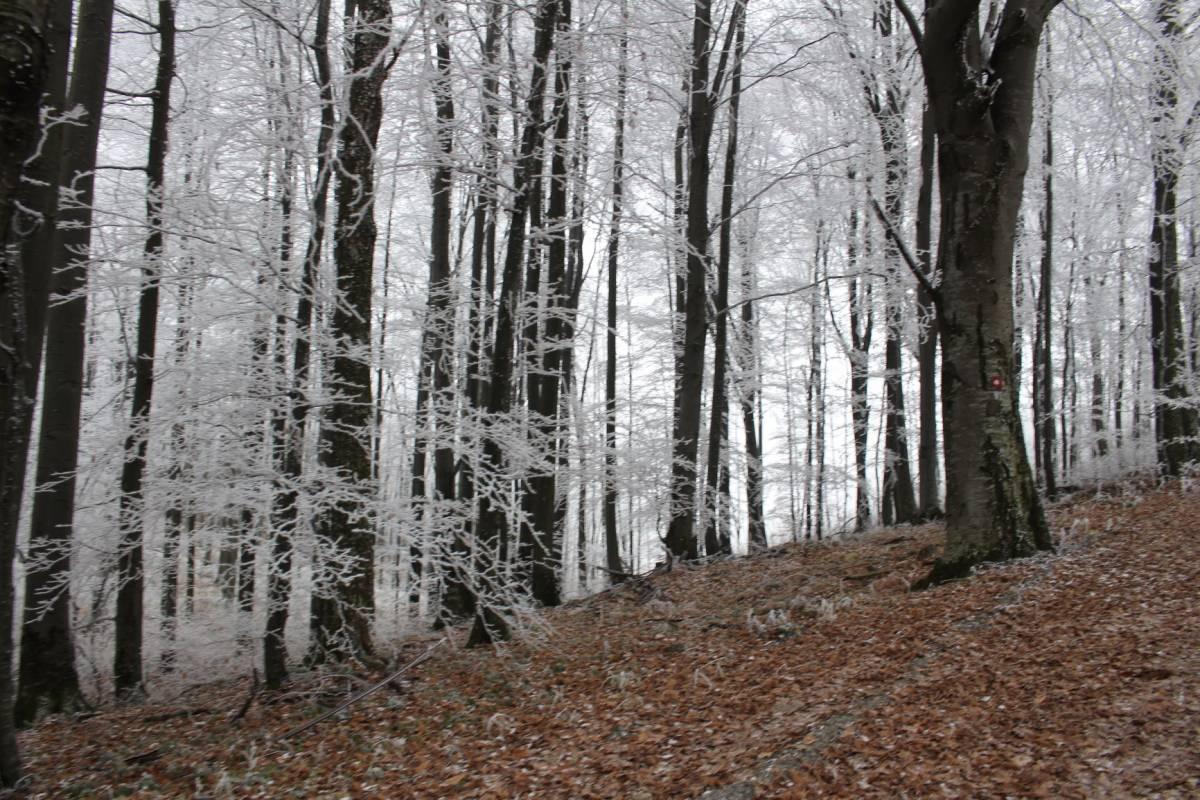 Danas oblačno sa snijegom i ledenom kišom