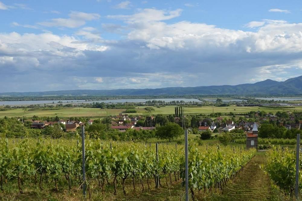 Javni uvid u prijedlog Programa raspolaganja poljoprivrednim zemljištem u vlasništvu države na području Općine Oriovac
