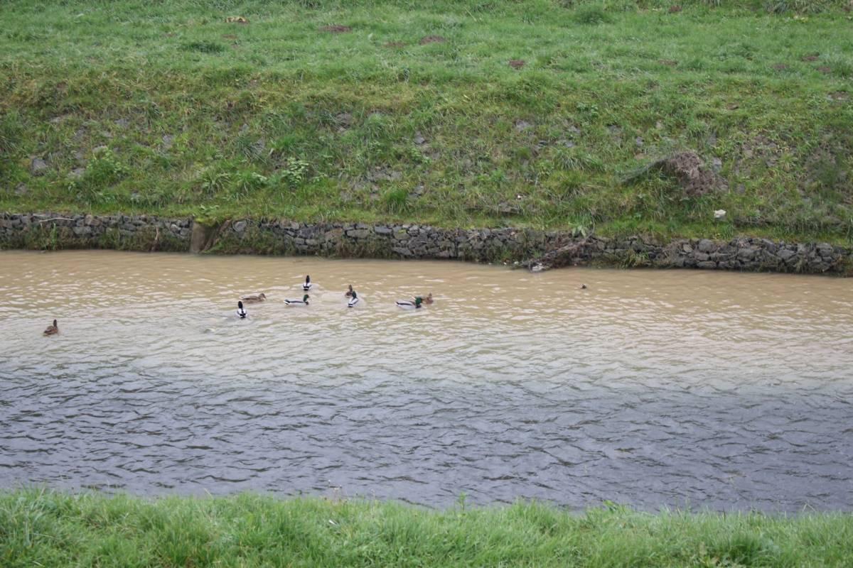 FOTKA DANA: U Požegi na Orljavi patke se peru