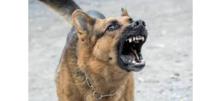 POLICIJA IZVIJESTILA: Pas ugrizao ženu za šaku, ženi pružena liječnička pomoć