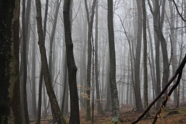 U Staroj Lipi nepoznati počinitelj posjekao i otuđio stabla