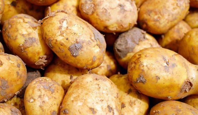 Tone krumpira propadaju, a mi kupujemo egipatski, francuski...
