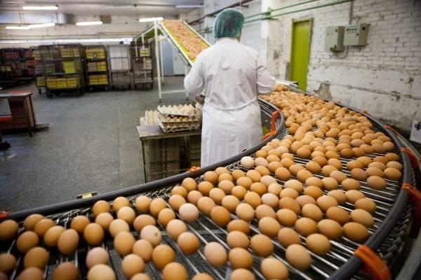 Jaja na policama nikad jeftinija, 30 komada prodaje se za 20 kn