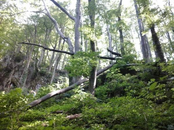 Nepoznati počinitelji posjekli i otuđili više stabala kod Ožegovaca