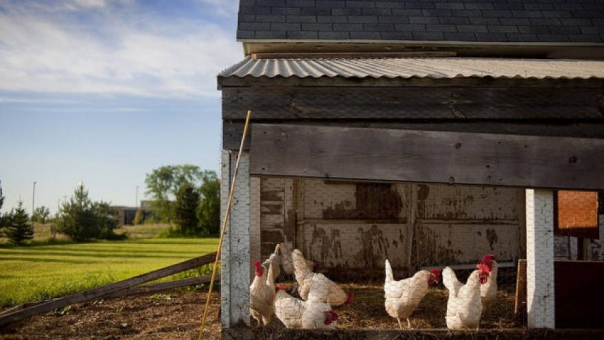 Čistio kokošinjac u Velikoj i našao tri ručne bombe