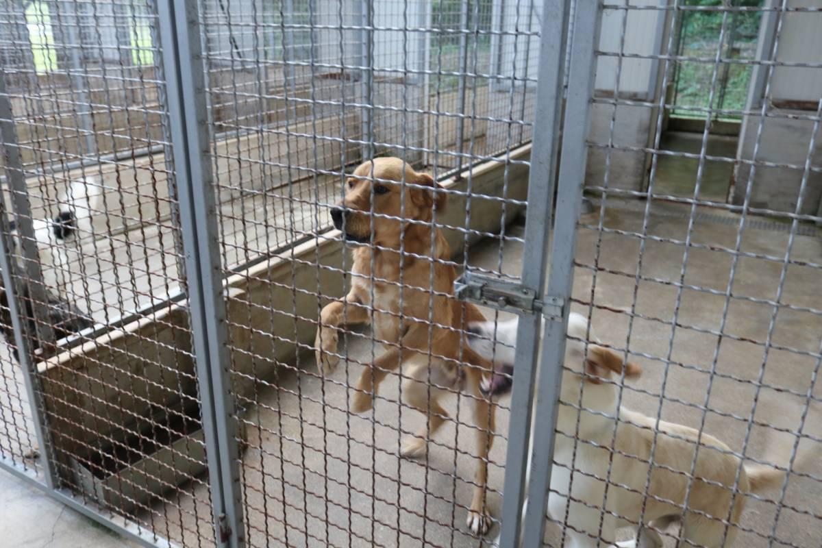 SKLONIŠTE ZA ŽIVOTINJE BUČJE: Najviše pasa i dalje udomljavaju Nijemci