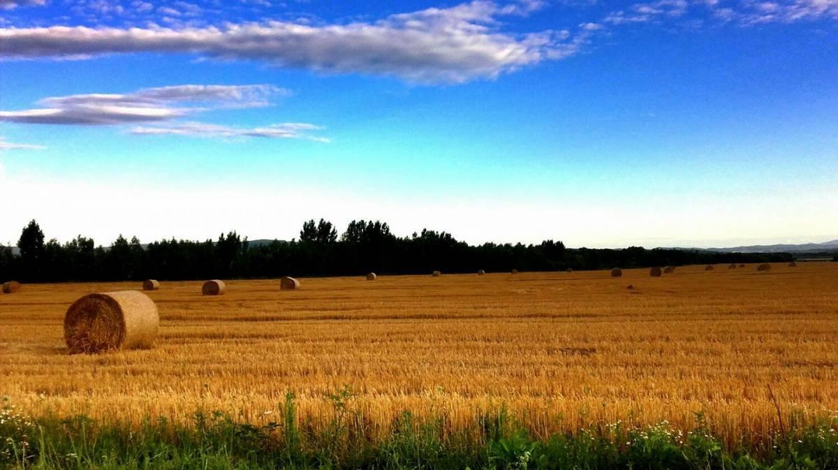 U jesen moguć val poskupljenja sirovina i hrane